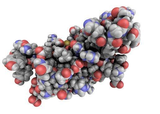struktur_menschliche_proteine_1