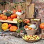 Kürbis im Herbst – Welche Sorten gibt es hier?