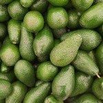 Die Avocado – Viel Fett aber trotzdem gesund?