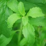 Stevia – Was ist es und worauf solltest Du achten